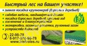 Озеленение и благоустройство.+79170789878 Рулонный газон.Посадка крупн