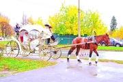 Прокат лошадей и пони,  заказ карет и саней,  обучение,  иппотерапия.